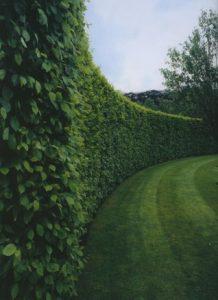 haie-bordure-jardin-318x437